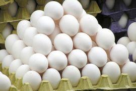 Denmark temukan dua ton lebih telur tercemar fipronil