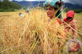 Petani harus merambah ke sektor hilir