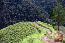 Perambahan hutan mengancam Taman Nasional Gunung Leuser