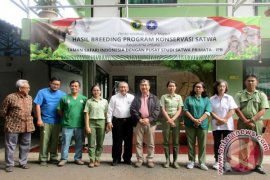 Ini Keberhasilan Pertama Di Dunia IB Banteng TSI-IPB (Video)