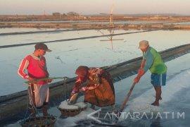 Produksi Sementara Garam Rakyat di Sumenep 149.640 Ton
