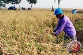 Petani diminta informasikan hasil panen
