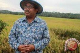 Produksi beras Kaltim belum cukupi kebutuhan lokal