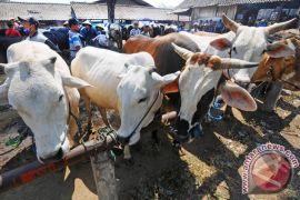 Penjualan hewan kurban Agam capai Rp85 miliar
