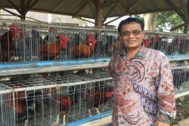 Kementerian Pertanian atasi gejolak harga telur ayam di Blitar