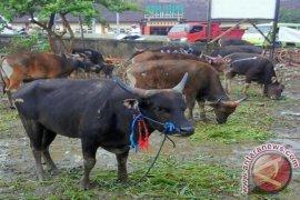 DPRD minta Distan periksa kesehatan hewan kurban