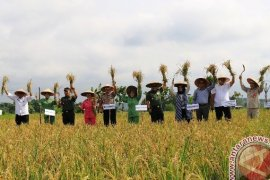 TMMD di Samarinda Hasilkan Panen 281 Hektare