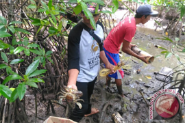 LSM Sampan Kalbar Dampingi Masyarakat Budidaya Kepiting