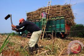 Datangi Kemenko Perekonomian, petani minta penghentian impor gula