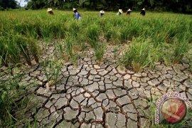 BMKG: Sepuluh desa di Cirebon kekeringan ekstrem