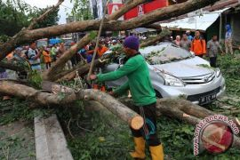 Pohon tumbang timpa mobil di Bandung