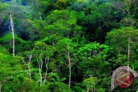 Norwegia Komitmen Kucurkan Dana Selamatkan Hutan Tropis