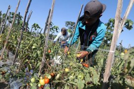 Petani Purworejo jual hasil tani lewat jaringan digital