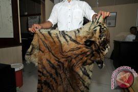 KLHK gagalkan jual beli kulit harimau