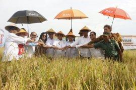 Tanggapan soal impor beras