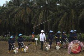 Presiden soroti rumitnya dana peremajaan kelapa sawit