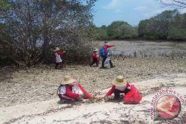 Kawasan mangrove Bangkalan didorong jadi kampung iklim