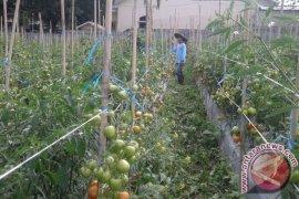 Petani Rejang Lebong Antisipasi Hama-Penyakit Memasuki Musim Hujan