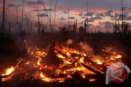 Tim sulit padamkam kebakaran perkebunan sawit di Sumbar
