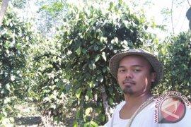 Petani Bangka Selatan berharap harga lada naik