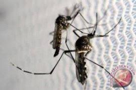 Teknologi radiasi, sekarang nyamuk bisa dimandulkan tekan DBD