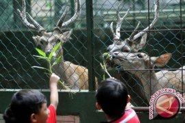 Hukuman Layak Untuk Muda-Mudi Usil Pencekok Miras Pada Hewan
