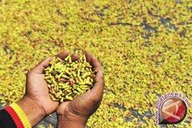 Petani di Malut minta Disperindag bantu atasi anjloknya harga cengkih