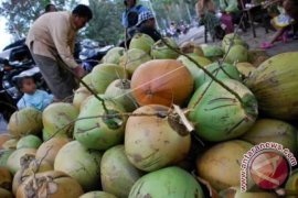Distan Kepulauan Sula kembangkan komoditi kelapa