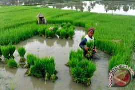 Progam pinjaman modal tanpa bunga untuk petani Sukabumi