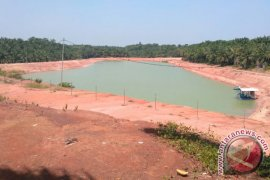 DLH: Perusahaan sawit antisipasi limbah cemari lingkungan