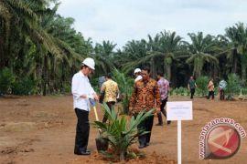 Presiden akan pantau perkembangan program sawit rakyat