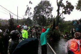 Jalur Cianjur-Bogor Lumpuh Akibat Pohon Tumbang