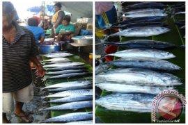 Harga ikan cakalang segar di Ambon naik