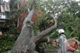 Hujan di Gunung Kidul sebabkan pohon tumbang