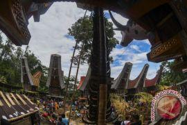Tana Toraja semakin dikenal dunia setelah Alum ditemukan
