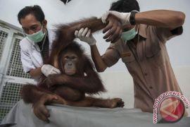 Dokter hewan harus tingkatkan kompetensi