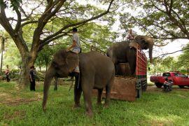 16 gajah sumatera huni PLG Minas Riau