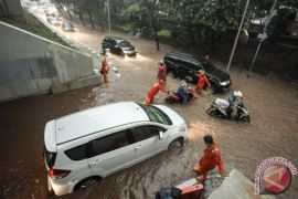 33 pohon tumbang di Jakarta akibat hujan angin