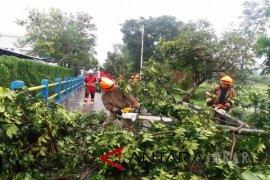 Bandung hujan lebat sejumlah pohon tumbang