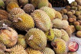 Panen Durian Membawa Berkah Bagi Warga Badui
