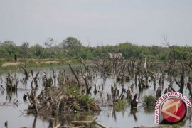 Penebangan liar ancam rusak kawasan mangrove Penajam