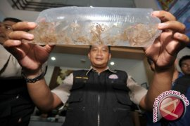 Petugas gagalkan penyelundupan 74 ribu benih lobster tujuan Singapura