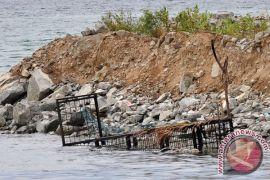 Demi tangkap seekor buaya, kerangkeng disebar di Phuket