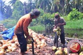 Distan programkan penanganan pascapanen kelapa