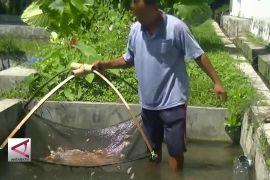 Temanggung Butuh 300 Juta Benih Ikan