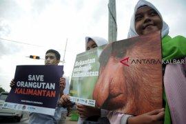 Sekitar 90 persen orangutan berada di luar hutan lindung