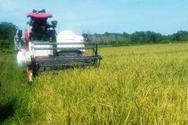 Desa Belatu Sulawesi Tenggara panen padi, harga gabah stabil