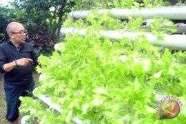 Manfaatkan Lahan Pekarangan Untuk Berkebun