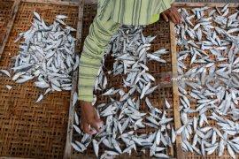 Ikan Asin Muncar