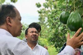 Kemenristekdikti targetkan lima varietas buah standar ekspor